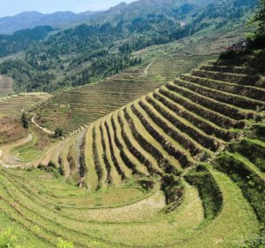 Defined terraced farming